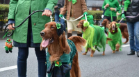 الثلاثاء اليوم الأخضر في يوم القديس باتريك